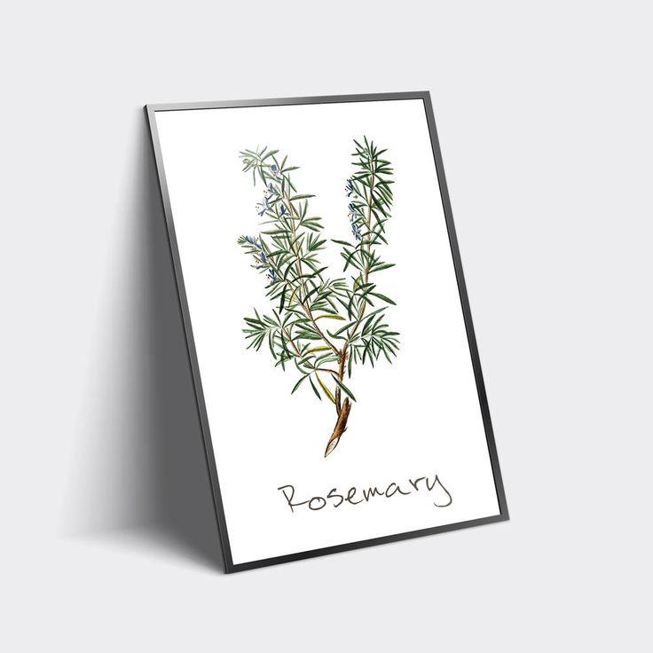 Rosemary Printable, Rosemary Plant, Rosemary Print, Rosemary Wall Art, Rosemary Herb, Rosemary Watercolor, Herb Prints http://etsy.me/2C4H36g #art #print #digital #rosemaryprintable #rosemaryplant #rosemaryprint #rosemarywallart #rosemaryherb #rosemary #herbs #plants