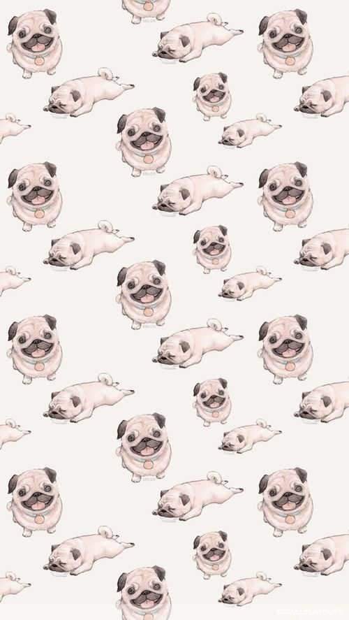 Imagem de pug, dog, and wallpaper