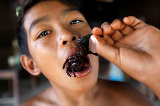 A boy eats a fried tarantula at his home in Kampong Cham province in Cambodia A boy eats a fried tarantula at his home in Kampong Cham province in Cambodia.