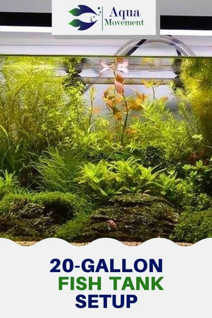 20 gallon fish tank setup ideas aqua movement fish