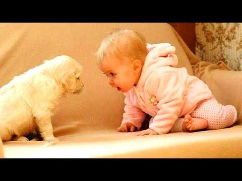 News Videos & more -  Watch the Funniest Videos on youtube - Funny Videos ★ Best Funny Babies & Dogs 2016 ★ New Funny Videos 2016 #Funny #videos on #youtube #Music #Videos #News Check more at http://rockstarseo.ca/watch-the-funniest-videos-on-youtube-funny-videos-%e2%98%85-best-funny-babies-dogs-2016-%e2%98%85-new-funny-videos-2016-funny-videos-on-youtube/