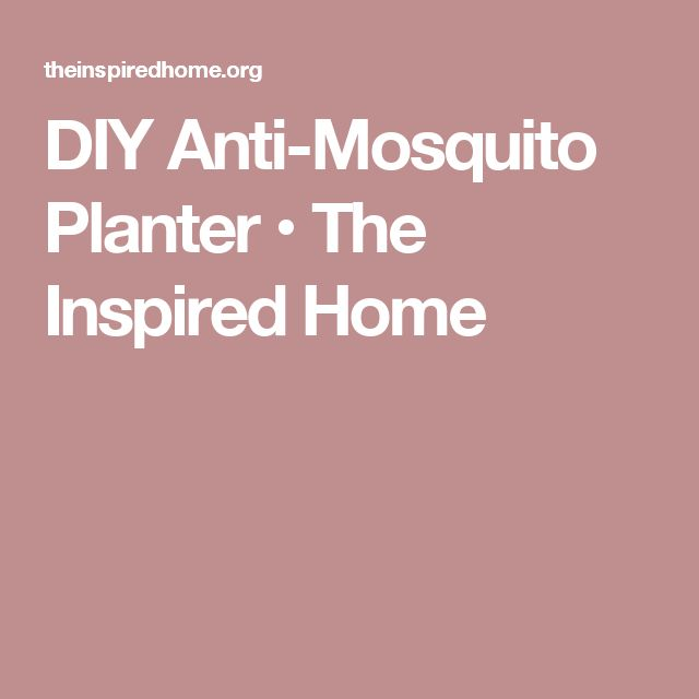 DIY Anti-Mosquito Planter • The Inspired Home