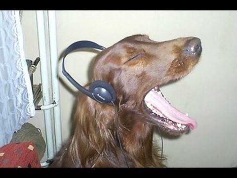 Perros cantando con sus dueños... ¡qué voces tan dulces!