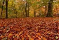 Vita Frugale: Come risparmiare in autunno