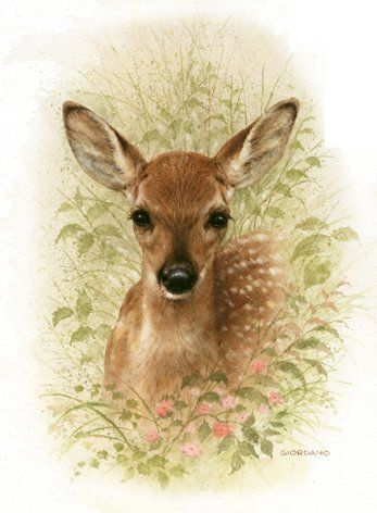 651 best Wildlife Art images on Pinterest | Wildlife art ...