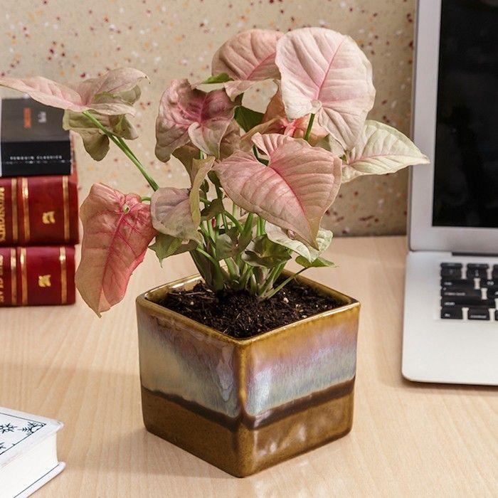 plante assainissante de bureau et interieur appartement