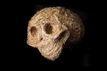 Skull, by Nalda Searles, 2008, image Eva Fernandez