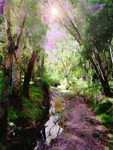 creek Halandri, Athens, Greece