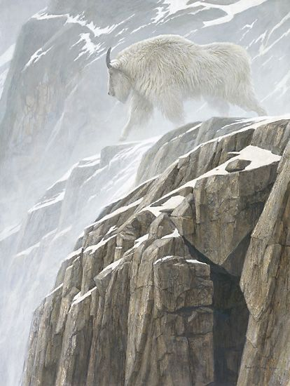 """Mountain Goat"" - painting by Robert Bateman.  There were so many mountain goats along the fjords going from Juneau to Skagway in Alaska."