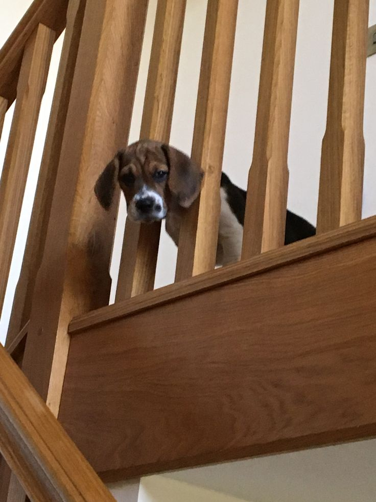 Every member of the family will enjoy traditional stair parts!