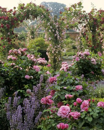 Pink bush roses and pink and red climbers spilling over pergolas, Mottisfont Abbey, Hampshire