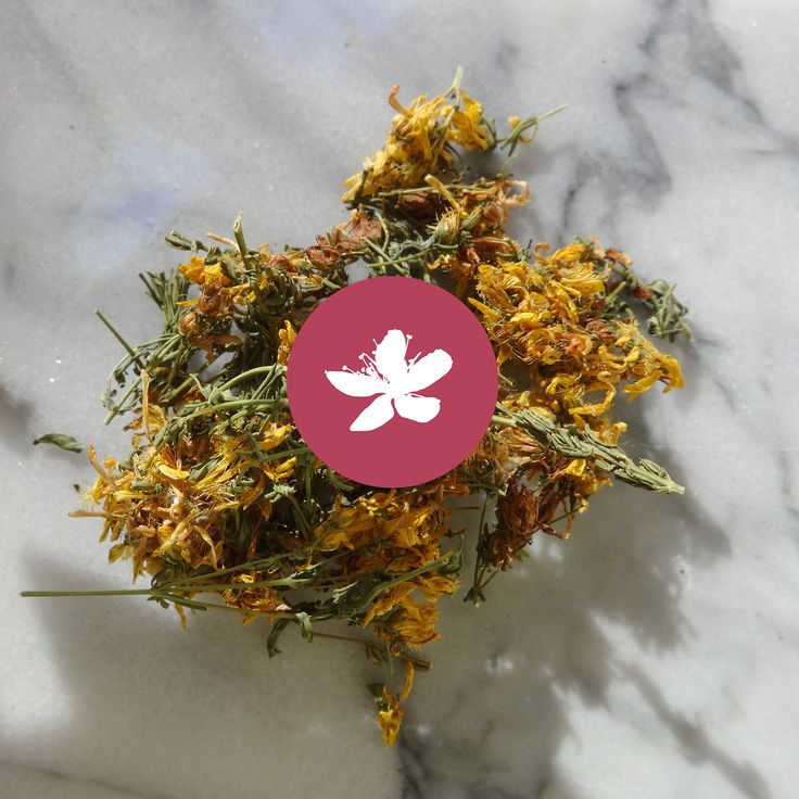 St. John's wort and its beautiful yellow flowers