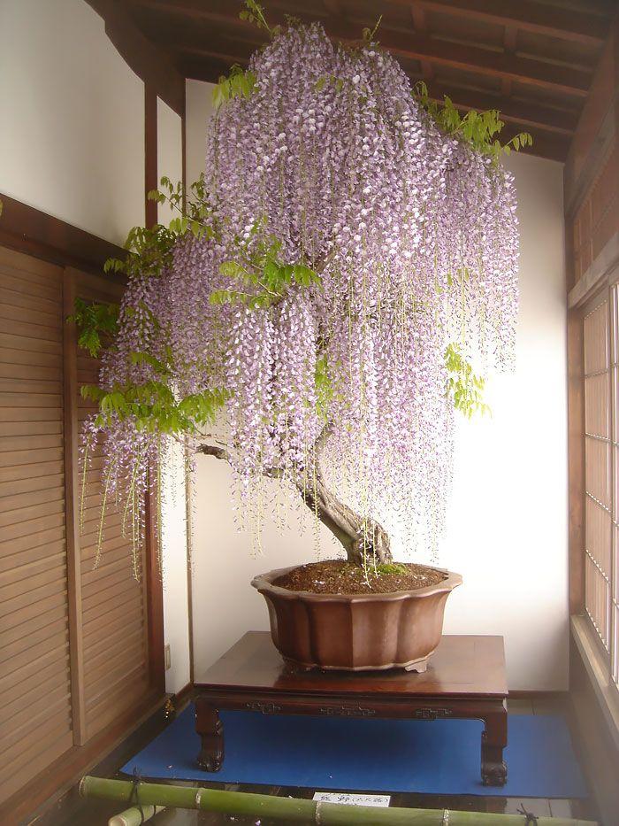 arvores bonsai 3                                                                                                                                                                                 Mais