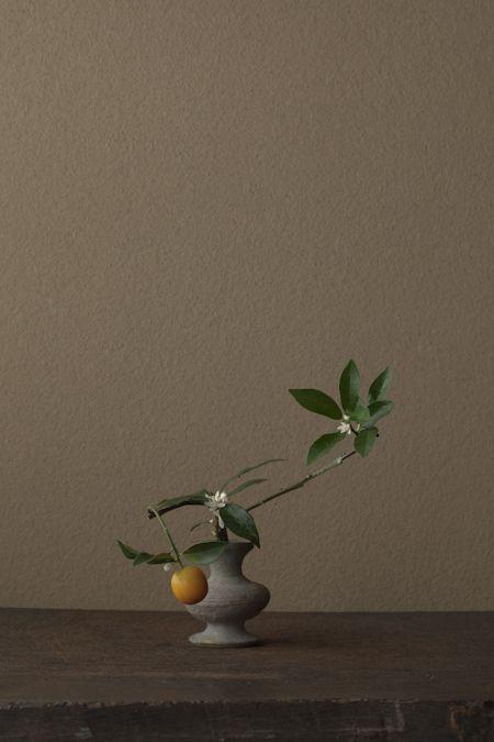花=金柑(キンカン)kumquat (Fortunella spp.) 一日一花 One Flower a Day – 川瀬敏郎 Kawase Toshiro