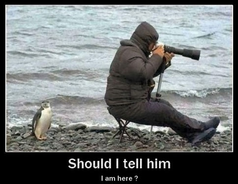 Sneaky penguin!