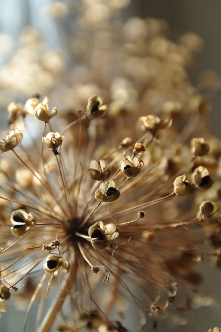 1000  images about seeds, pods, berries, nuts... on pinterest ...