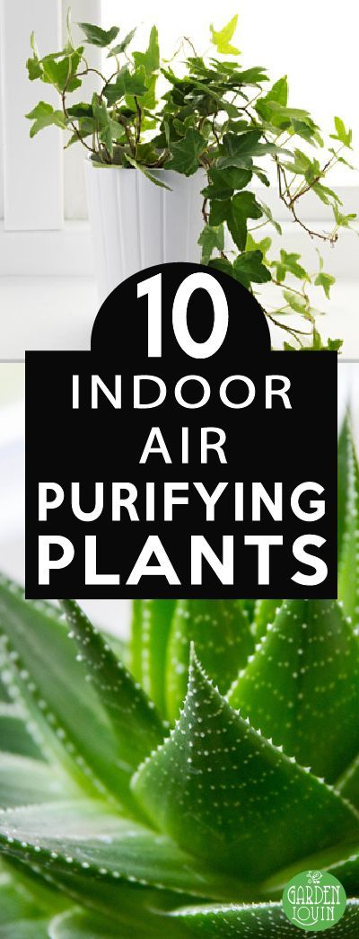 Top 10 air purifying plant that also de-stress you.  I need some in my home and at work!