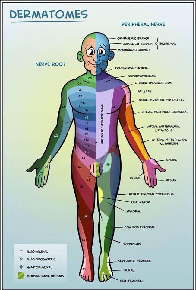Enfermedades y síndromes