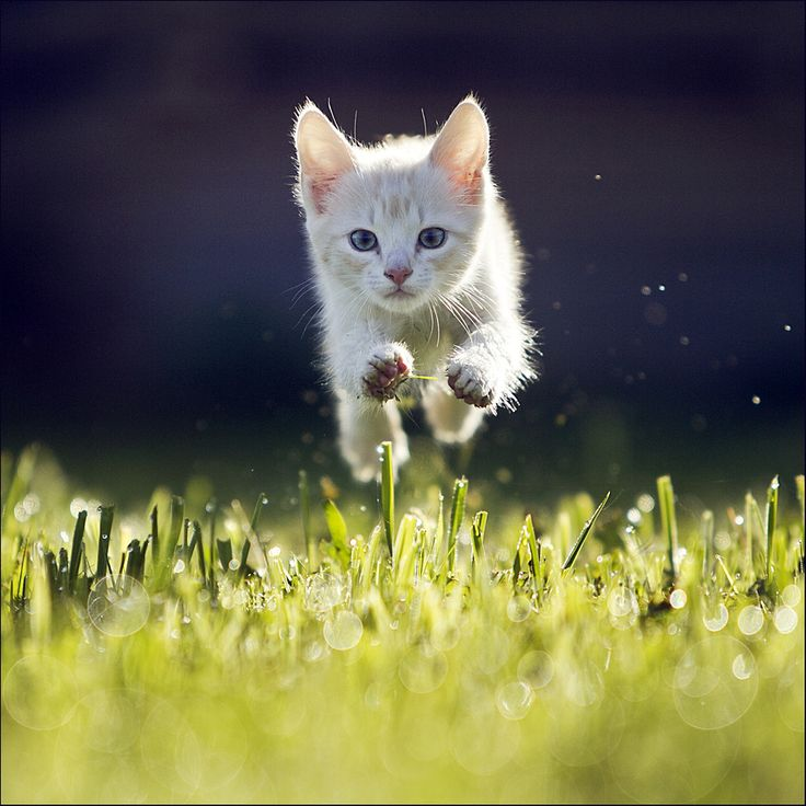 This should be the subject of a subtitle contest - Kitty by Maris Ojasuu, via 500px