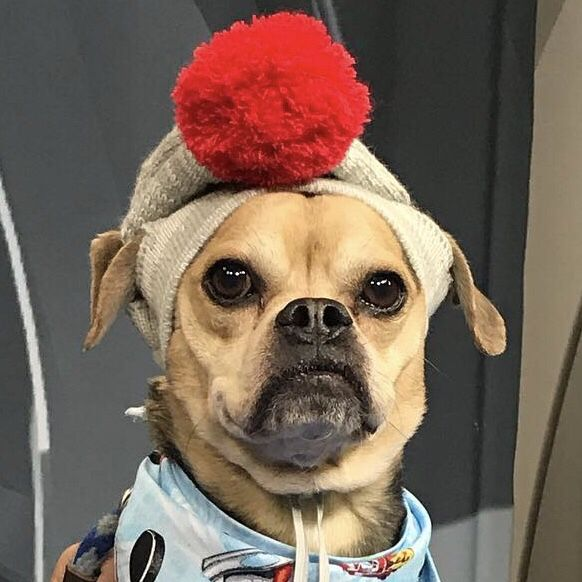 You Ve Heard Of Doug The Pug Let Lucas County Canine Care