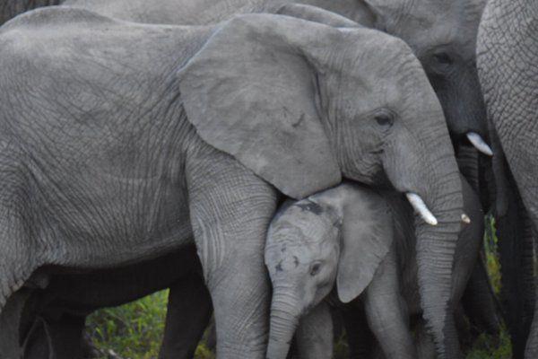 Marula & baby Vusi all cosy at Thula Thula Private Game Reserve 2 hours North of Durban, Kwa Zulu Natal www.thulathula.com