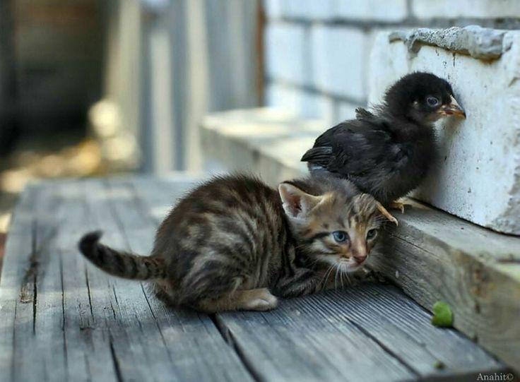 можете картинка как животные помогают друг другу шокера
