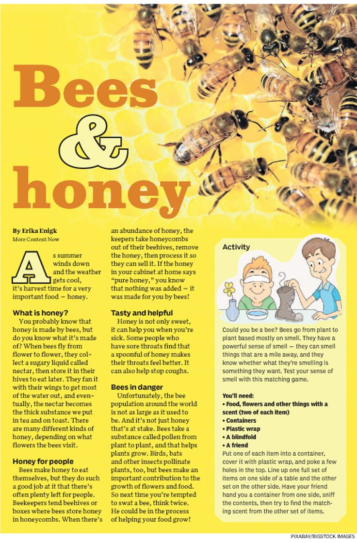 Wasps, bees, and hornets