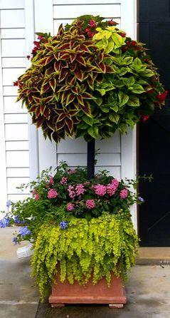 Gardening Tips On Pinterest in Gardening Tips For Money Plant though Gardening T…