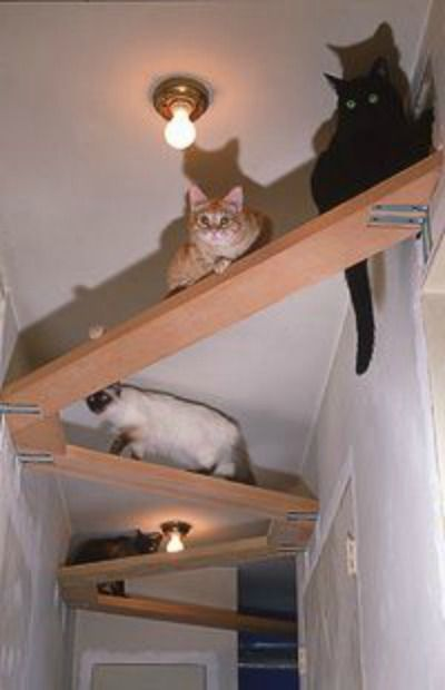 Cool Cat Tree Plans: Cat Tree Plans In Space? Outta Control Cat Shelves!