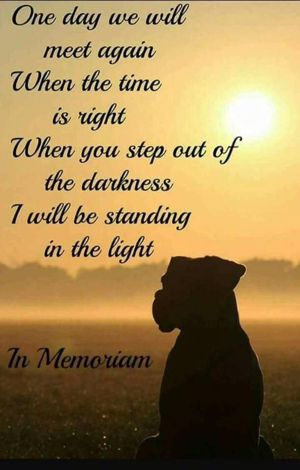 One Day We Will Meet Again When The Time Is Right Wen You Step Out Of The Darkness I Will Be Standing In The Light Dogeu Dog Poems Pet Loss Grief
