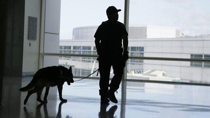 All'aeroporto di Manchester i cani scovano salsiccia e formaggio, non la  droga e banconote