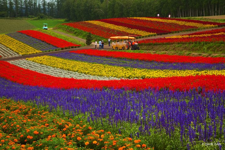 "famous+flower+gardens+in+the+world | beautifully manicured flower fields at ""Panoramic Flower Gardens ..."