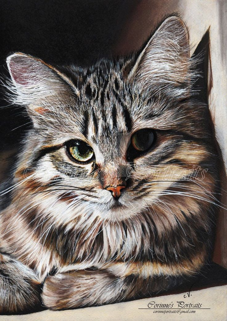 Cat in colored pencil - Chat by Sadness40.deviantart.com on @DeviantArt