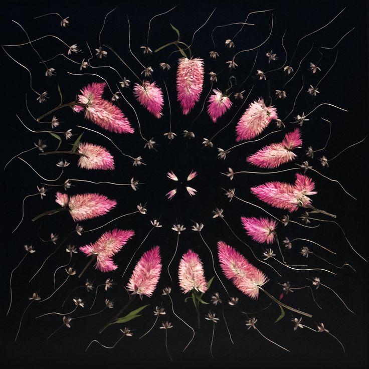 Bild aus den Blüten des Brautstrausses Kunst aus Blüten pressed flowers