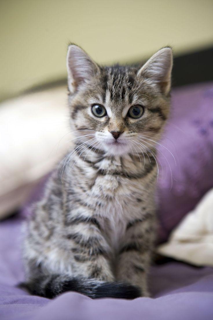 фото серых и полосатых котят она входит городской