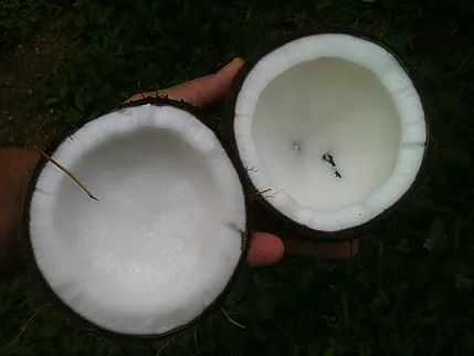 Coconut oil is not only great to use in cooking, but paddlers can benefit from it too! Here are six ways that it can be useful out on the water: