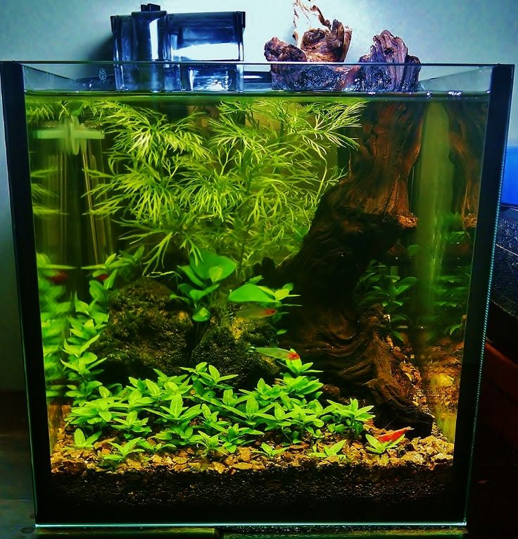 Aquascaping Magazine: 2749 Best Images About Aquarium Ideas On Pinterest