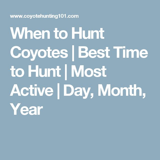 When to Hunt Coyotes | Best Time to Hunt | Most Active | Day, Month, Year