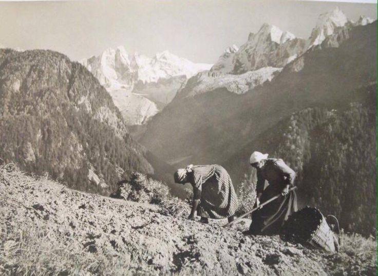coltovazione alpina a Soglio (Val Bregaglia, Grigioni) - fotografia di Elisa Nunzi Giovanoli