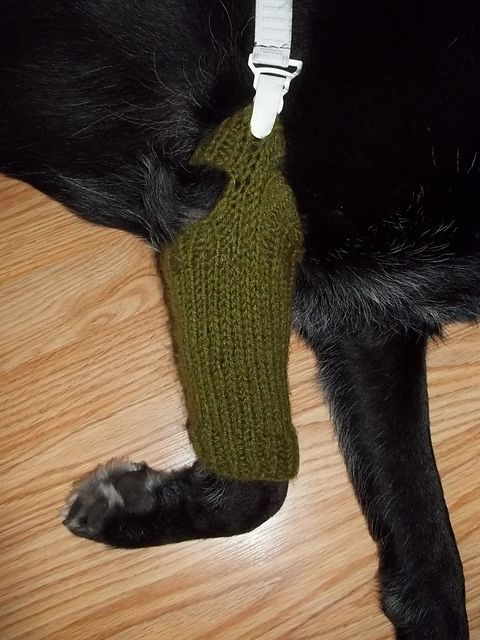 a knit leg cover to stop gibson from chewing and licking a