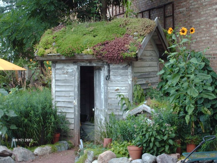Bloomin Gardens Succulent Roofed Shed Sycamore Il Close
