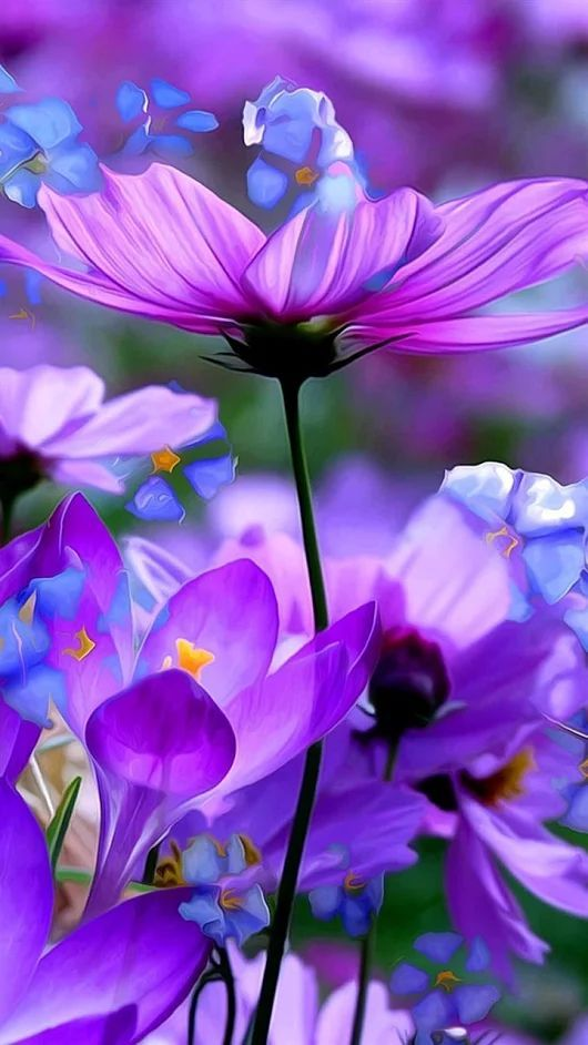 Purple & Lavender Flowers. Follow @ashersocrates for more wild flowers.