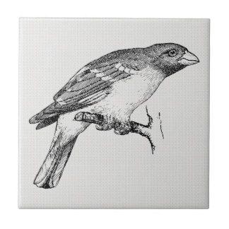 Pájaro negro y blanco del dibujo lineal azulejo cuadrado pequeño