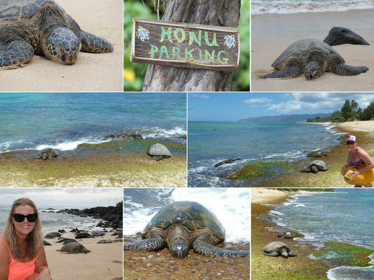 Laniakea Beach - best for turtle spotting!  http://www.thegirlswhowander.com/2017/04/08/highlights-of-oahu-hawaii/