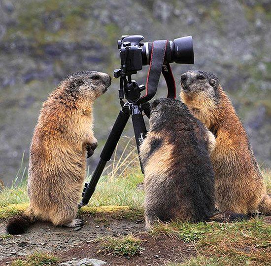 """""""Que porra é essa, marmota?"""""""