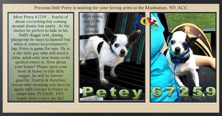 Xl pitbull puppies for sale az
