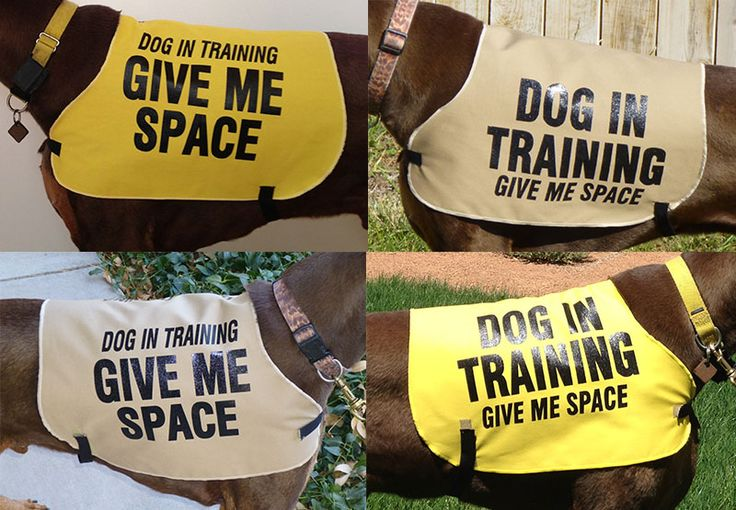 Dog In Training Vest - Awesome product for helping dogs in public!  This is what I will be ordering for Lincoln. . Peace of mind for both of us.
