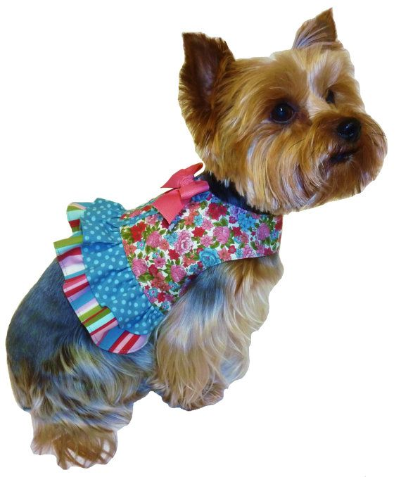 45 Best Images About Bougie Dogs On Pinterest Sewing