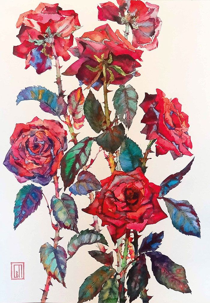красные розы | шотландские акварели | Sofia Perina-Miller | #holidays #watercolor #floral #roses