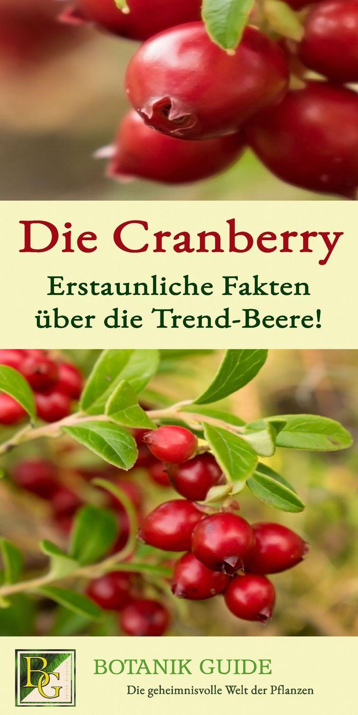 Die Cranberry Erstaunliche Fakten Uber Die Trend Beere Cranberry Rezepte Mit Obst Erstaunliche Fakten